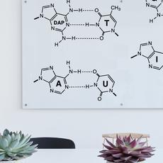 Молекулярная биология и генетика
